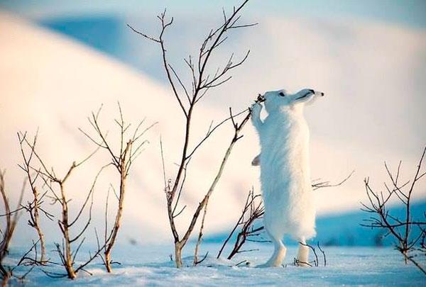 Зима. Отяготительные афоризмы о зиме